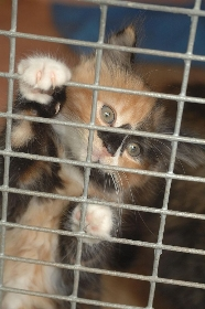 Cats Protection League Maidstone