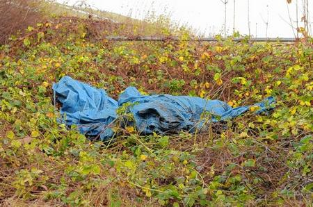 The dead body of a young pony under a tarpaulin in Wilmington