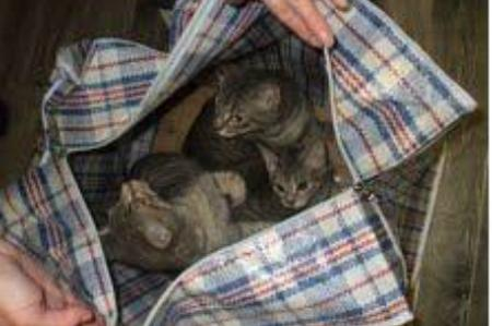 Kittens were found dumped at Westenhanger station
