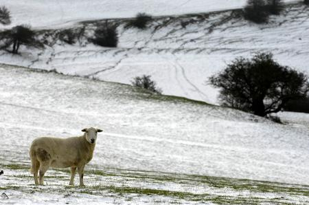Wintry scenes along on Farthing Common between Canterbury and Folkestone