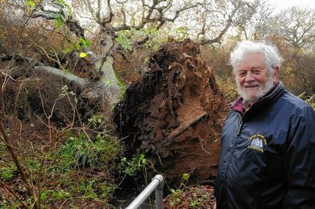 Peter Firmin with fallen oak.
