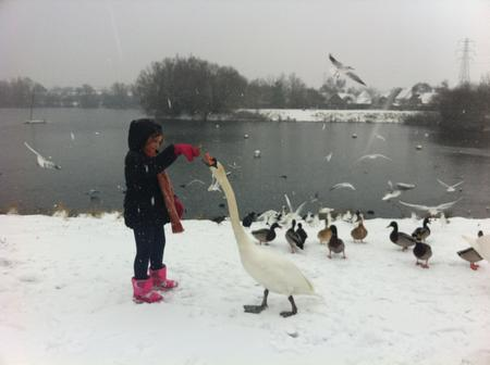 Katy aged eight feeds a swan at Leybourne Lakes