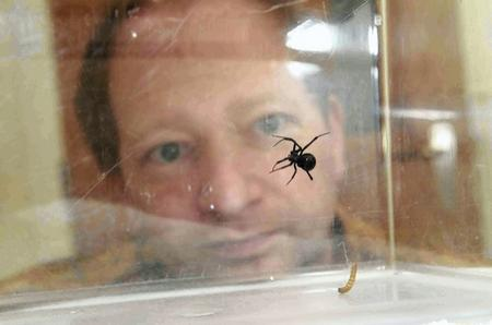 Maidstone vet Mark Rowland with a potentially-deadly black widow spider discovered in a container at Chatham Docks
