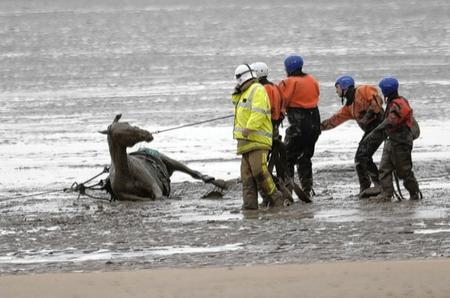 Horse gets stuck in the mud at Greatstone beach