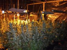Drugs factory uncovered in Northfleet