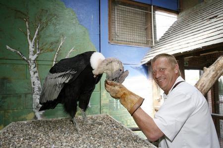 Alan Ames, boss of Eagle Heights bird of prey centre