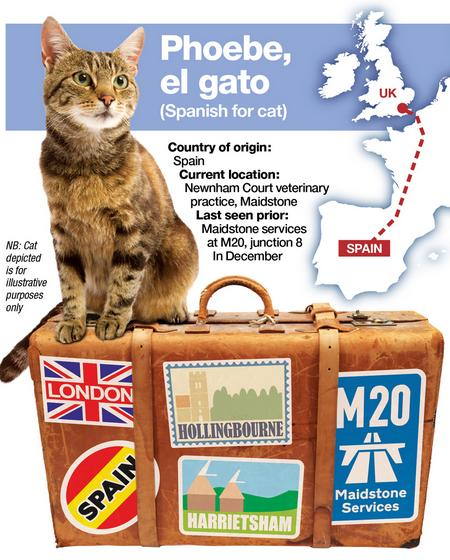 Phoebe the cat had a 1,000-mile adventure after fleeing from her Spanish owner.