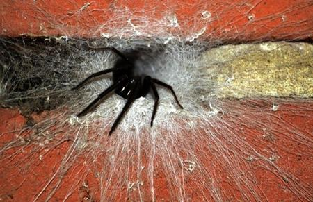 A Segestria Florentina spider was discovered by Canterbury resident Andy Seaman