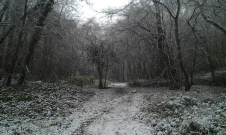 Snow in Walderslade Woods. Picture by Lauren Wright
