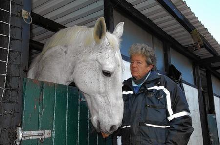 H, a male Irish Draft cross. Stella King, yard manager at Canterbury Horse Rescue.
