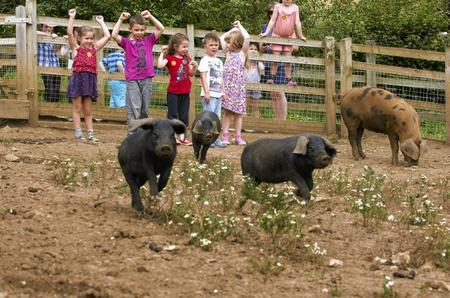 Children prepared for the pig racing at Kent Life, Sandling