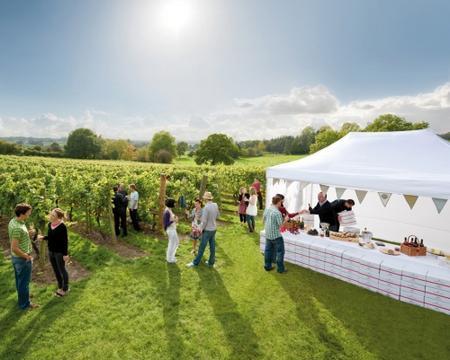 Chapel Down vineyard, as part of Visit Kent's Kent Contemporary campaign