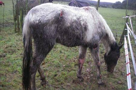 This horse was found collapsed near a footpath in Swanley