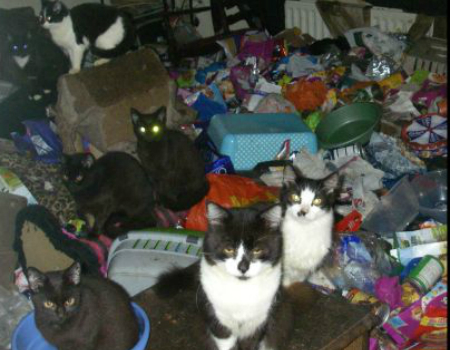 The cats were forced to live in a cramped house full of rubbish