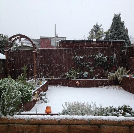 Reader Ruth Dalton's garden in Summerson Close, Rochester