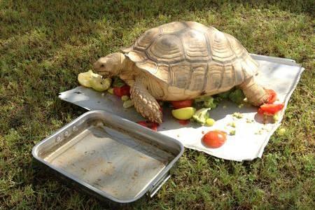 Gillingham FC chairman Paul Scall's giant tortoise Blake was stolen from outside a Dubai hospital