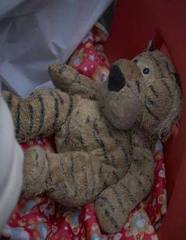 Libby Dadson's teddy Tiger